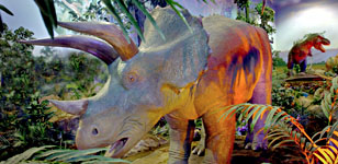 Triceratops_feature