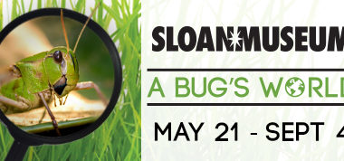 Summer '16 - A Bug's World at Sloan Museum